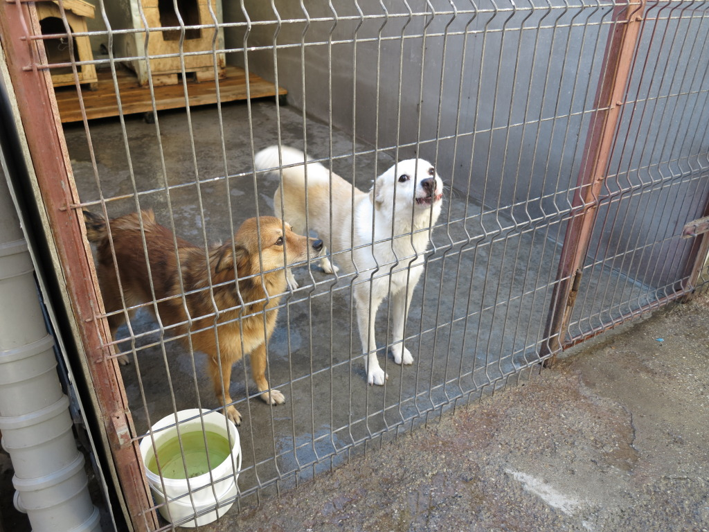 Les chiens d'Adina IMG_0866