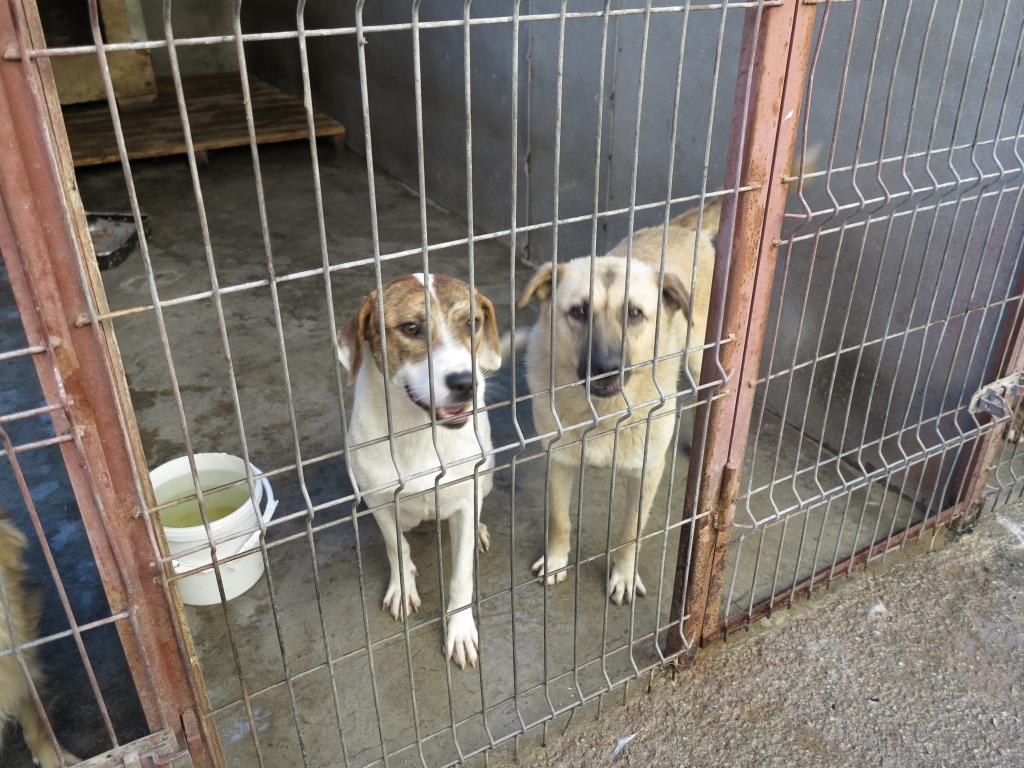 Les chiens d'Adina IMG_0868