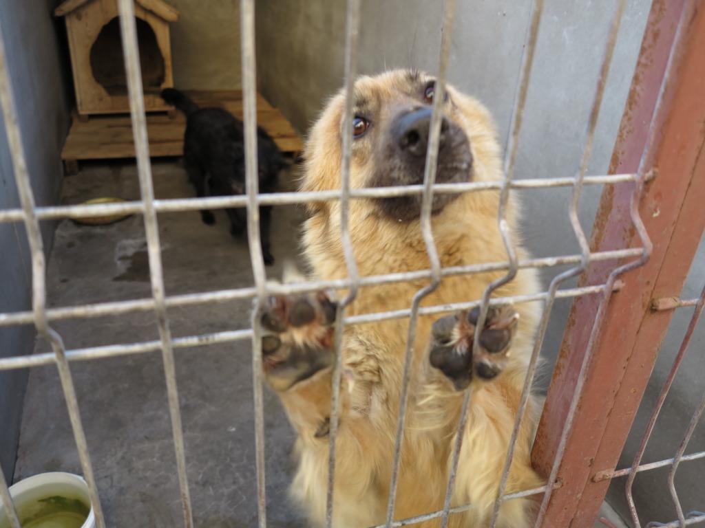 Les chiens d'Adina IMG_0870
