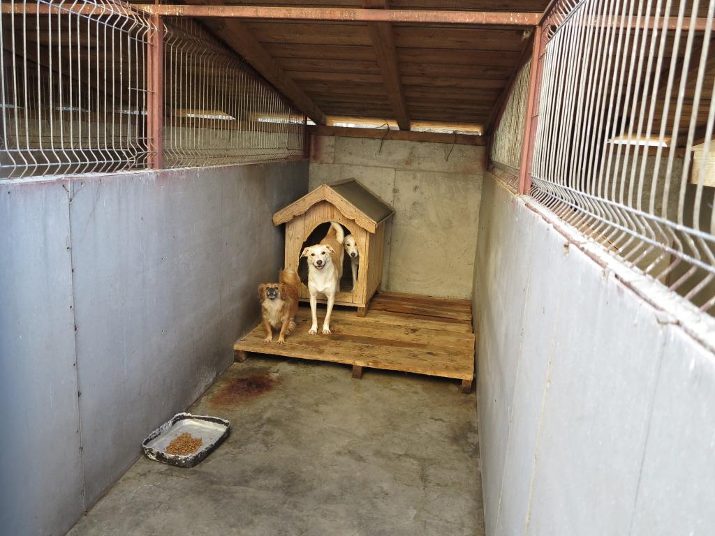 Les chiens d'Adina IMG_0871