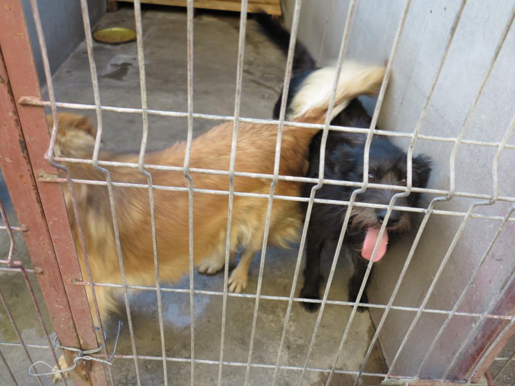 Les chiens d'Adina IMG_0877