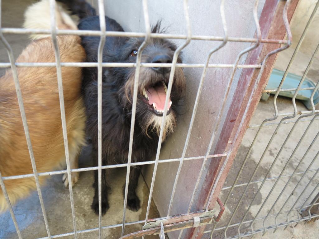 Les chiens d'Adina IMG_0878