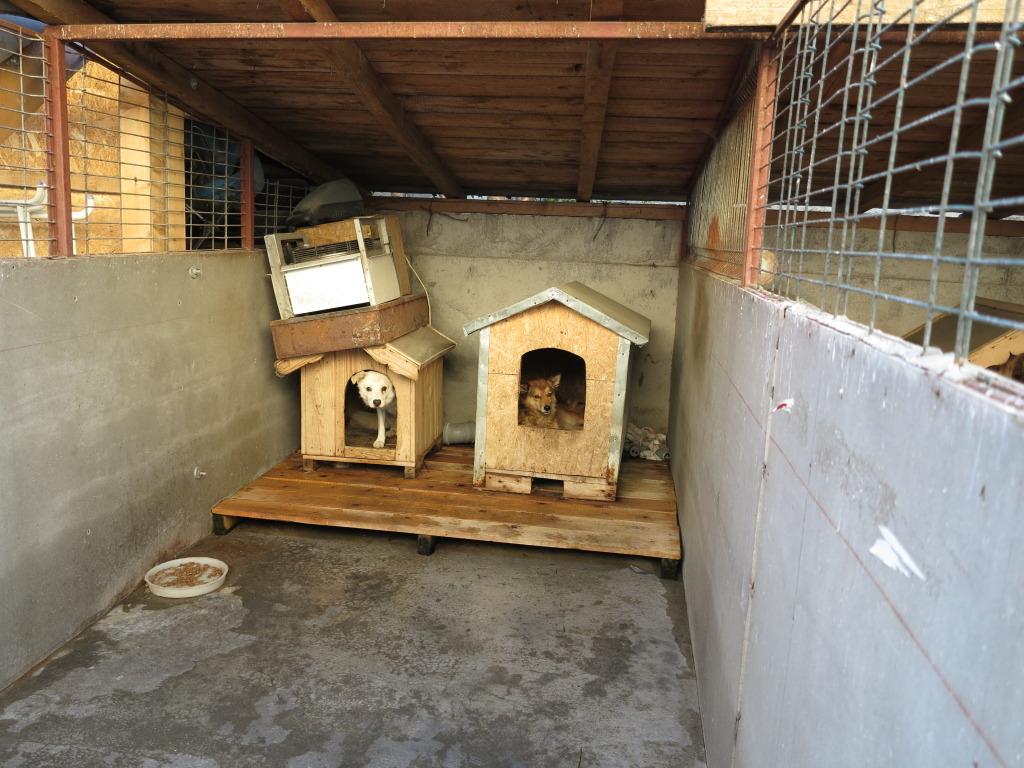 Les chiens d'Adina IMG_0880