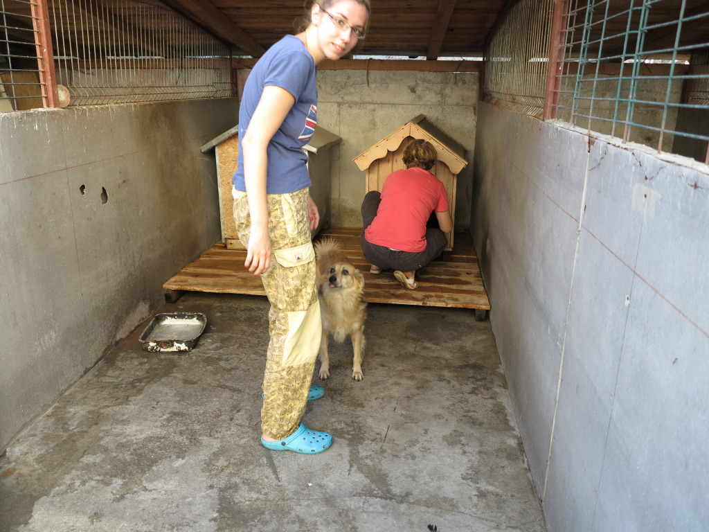 Les chiens d'Adina IMG_0881