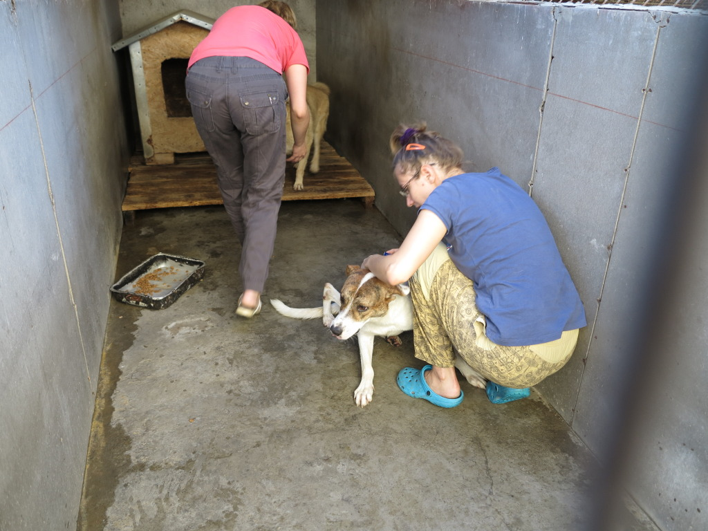 Les chiens d'Adina IMG_0889
