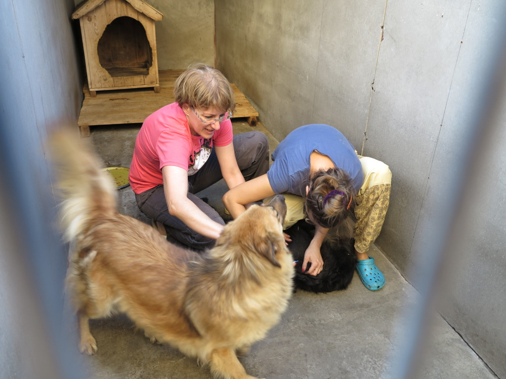 Les chiens d'Adina IMG_0905