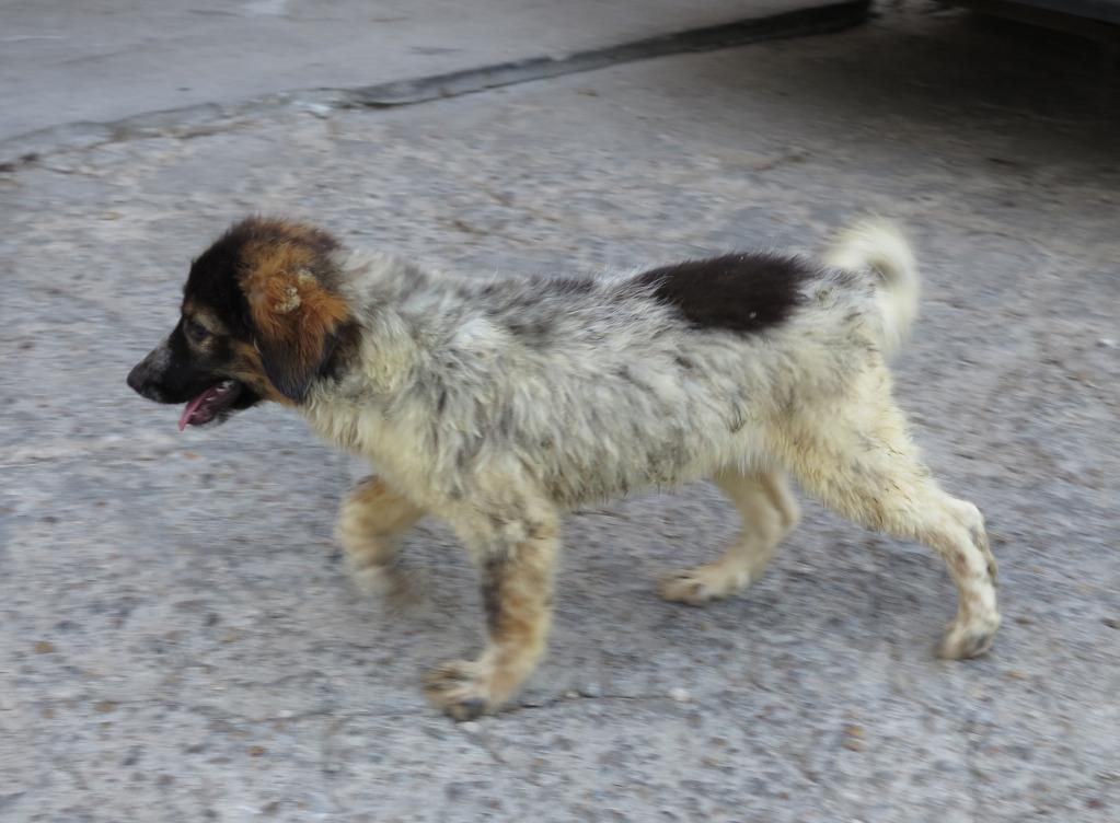 Spot, né en avril 2012, abandonné à l'âge de 3 semaines IMG_09182