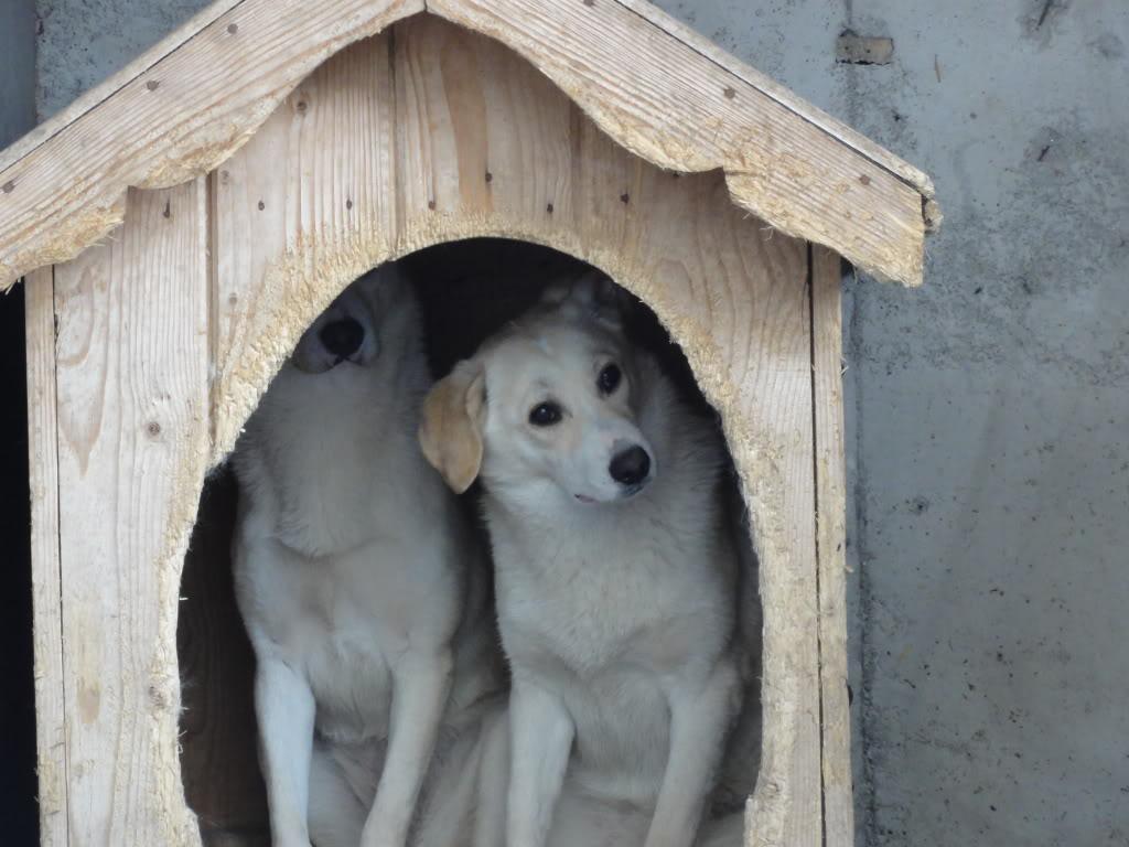 Les chiens d'Adina DSC08648