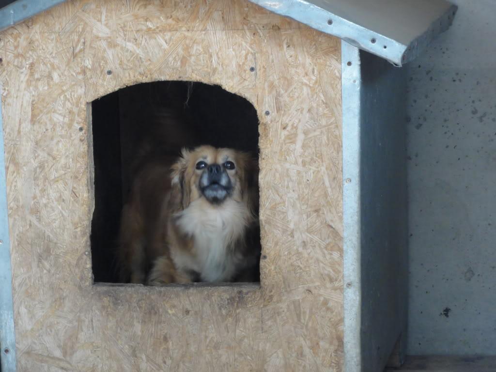 Les chiens d'Adina DSC08649