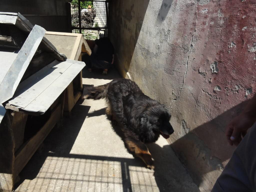 Les chiens d'Adina DSC08652