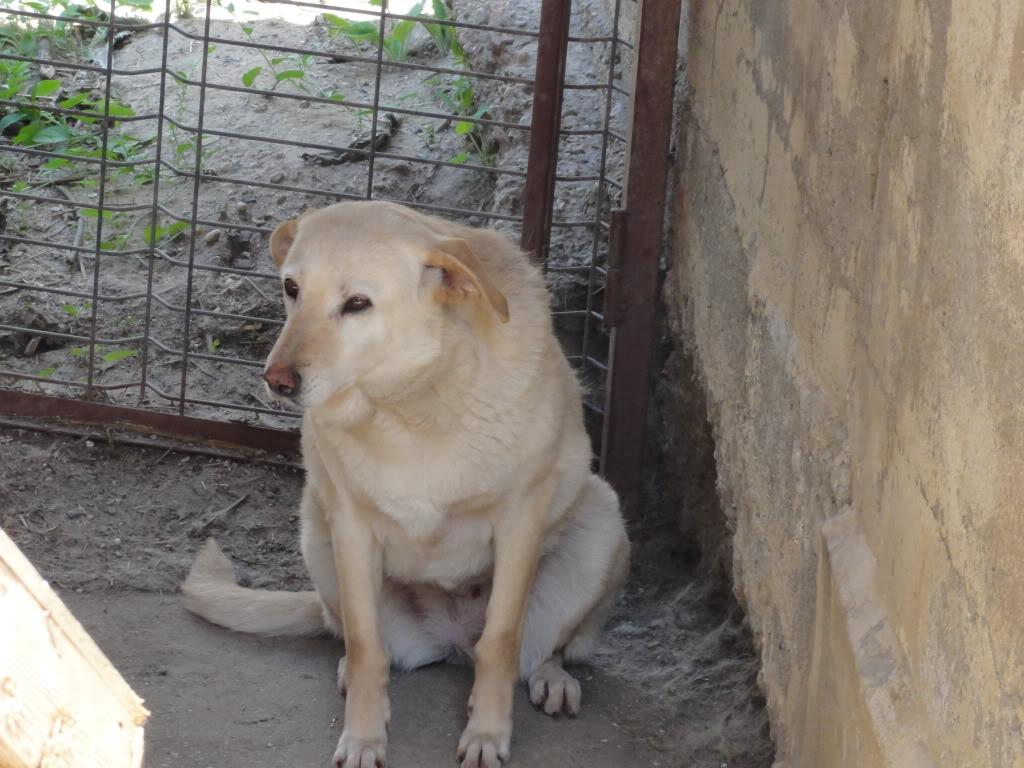 Les chiens d'Adina DSC08654