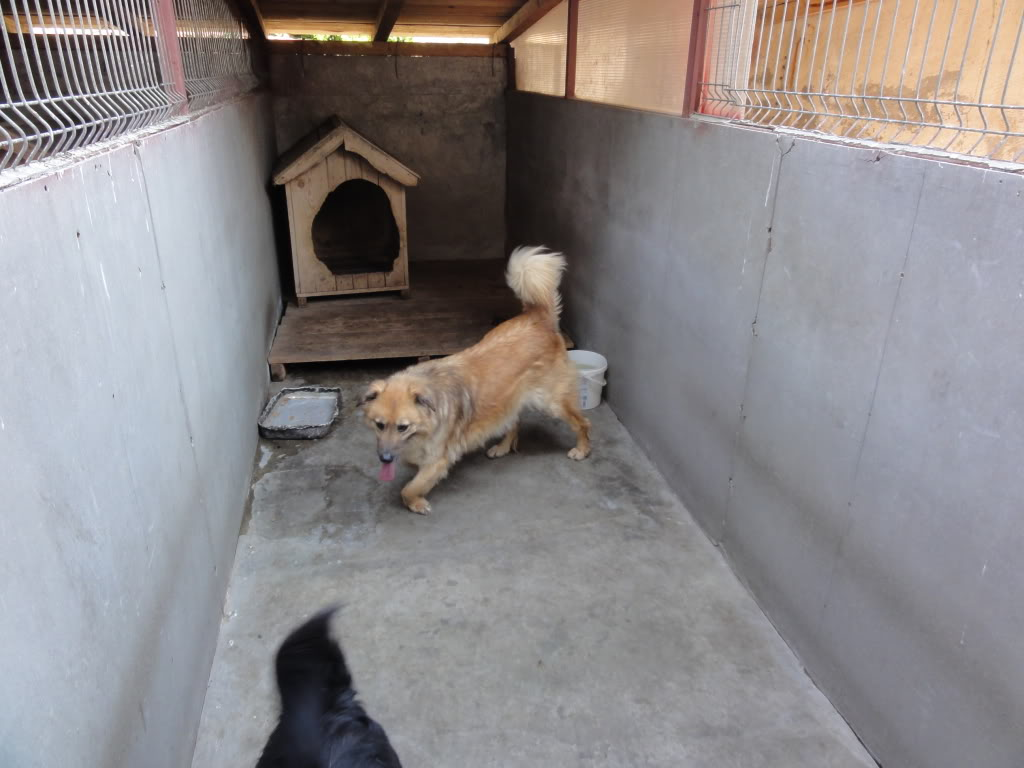 Les chiens d'Adina DSC08655