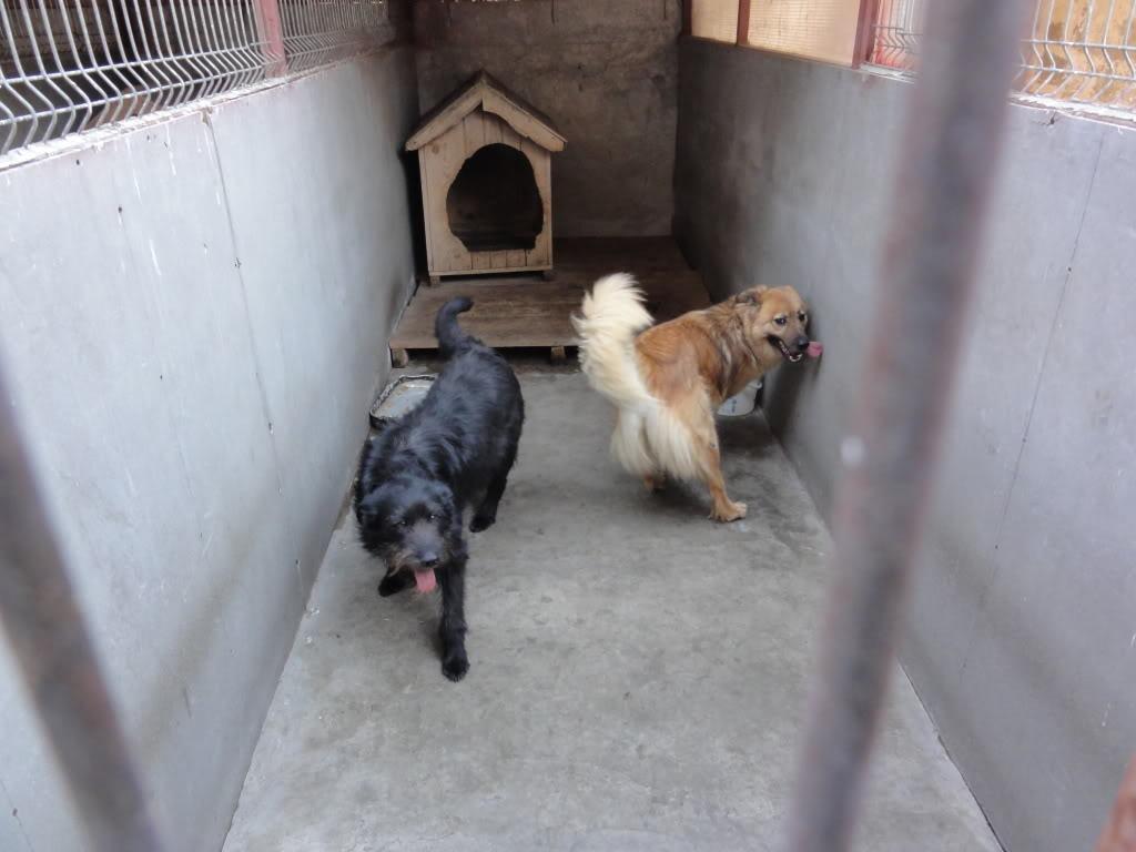Les chiens d'Adina DSC08660