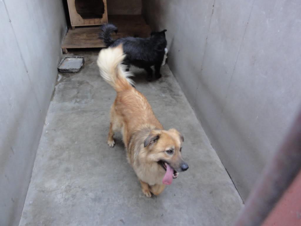 Les chiens d'Adina DSC08662