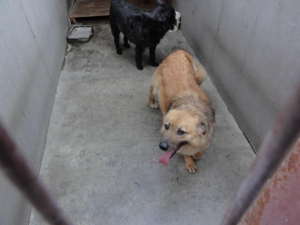 Les chiens d'Adina DSC08663