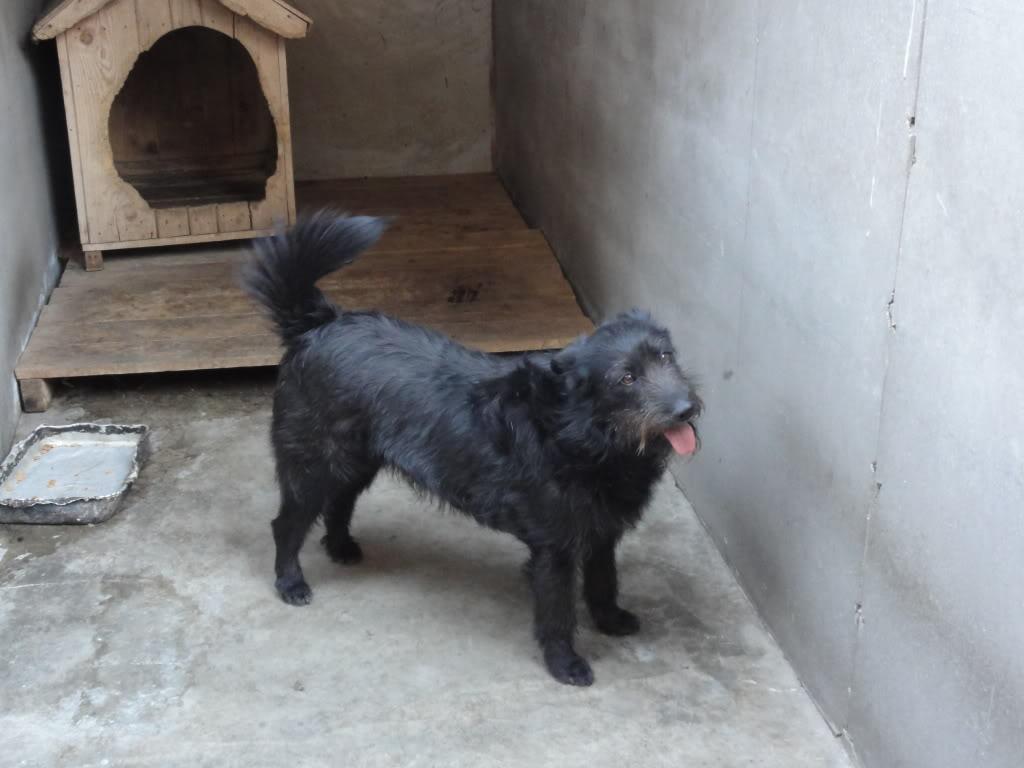 Les chiens d'Adina DSC08664