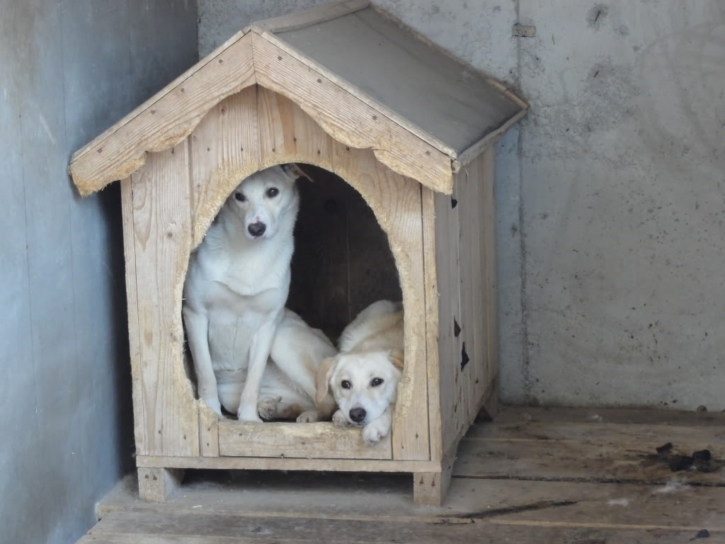 Les chiens d'Adina DSC08665