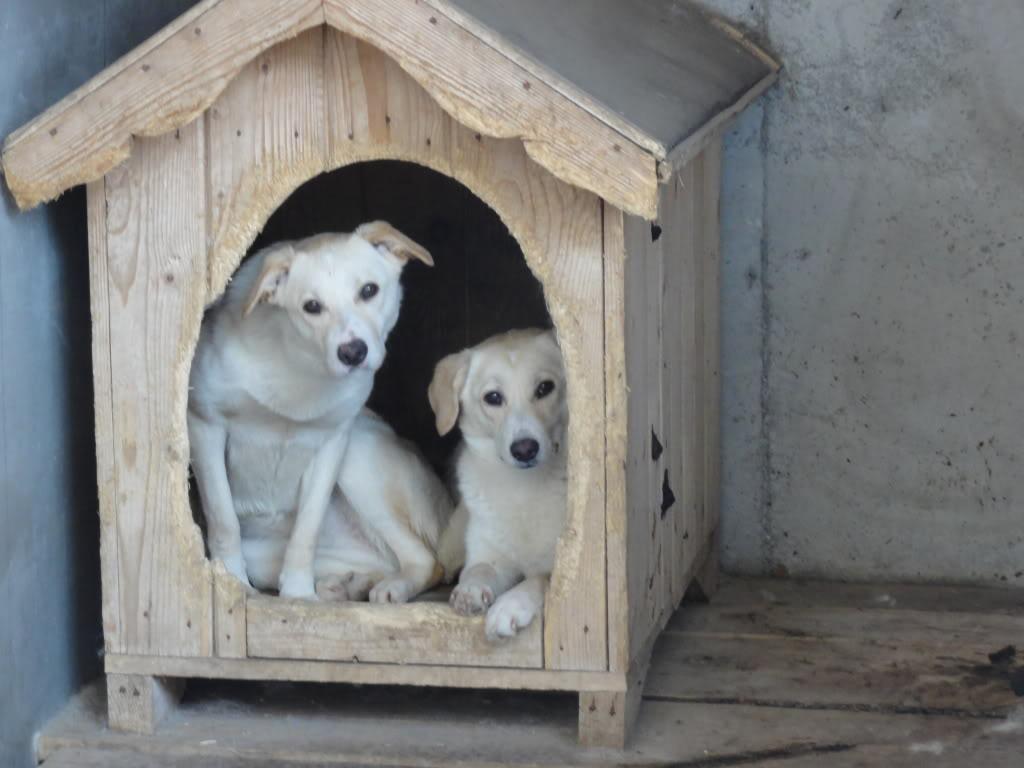 Les chiens d'Adina DSC08666