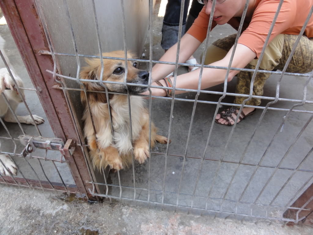 Les chiens d'Adina DSC08675