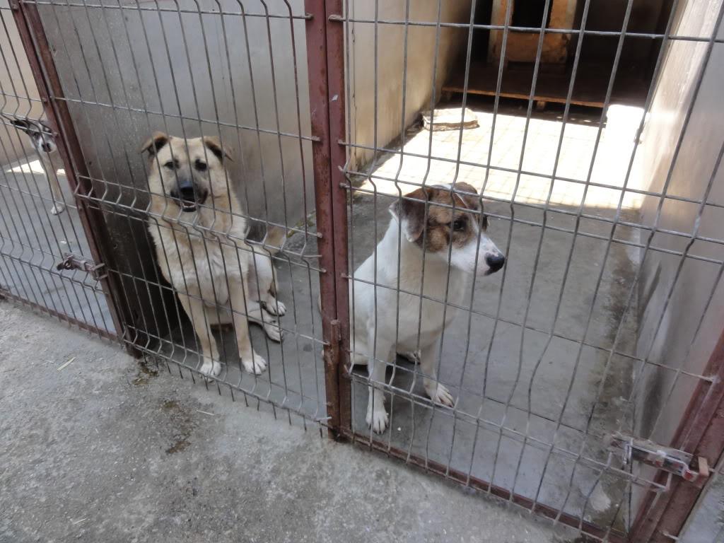 Les chiens d'Adina DSC08677