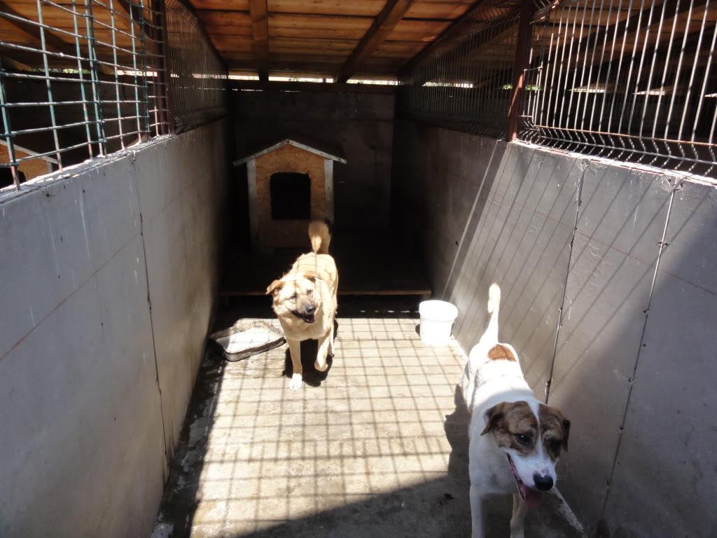Les chiens d'Adina DSC08683