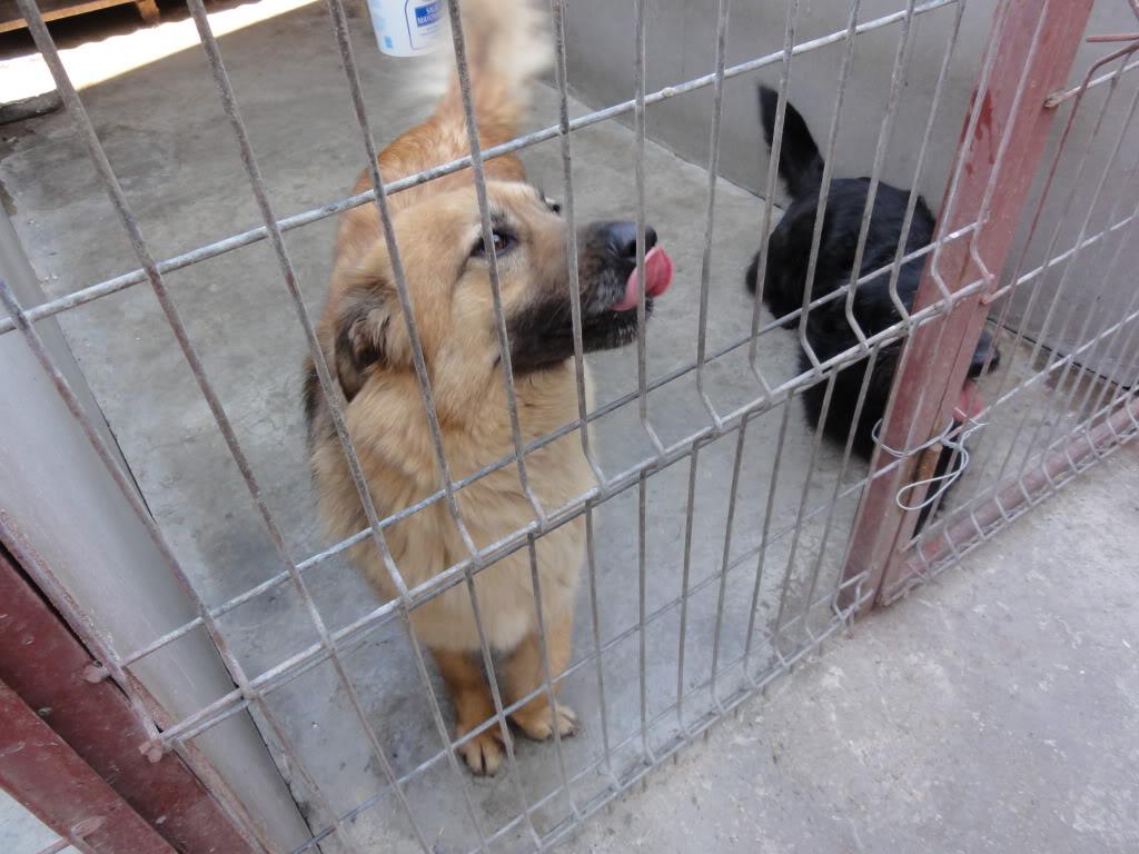 Les chiens d'Adina DSC08686