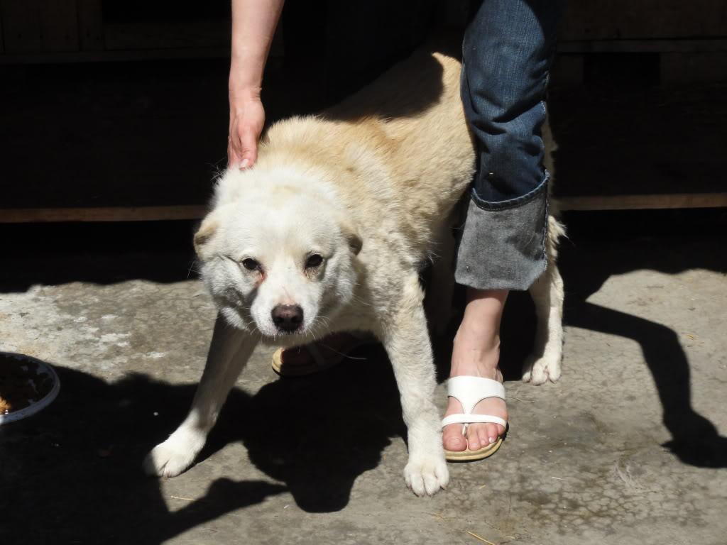 Les chiens d'Adina DSC08695