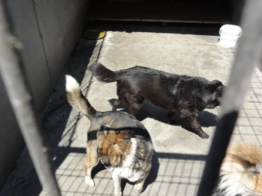 Les chiens d'Adina DSC08706