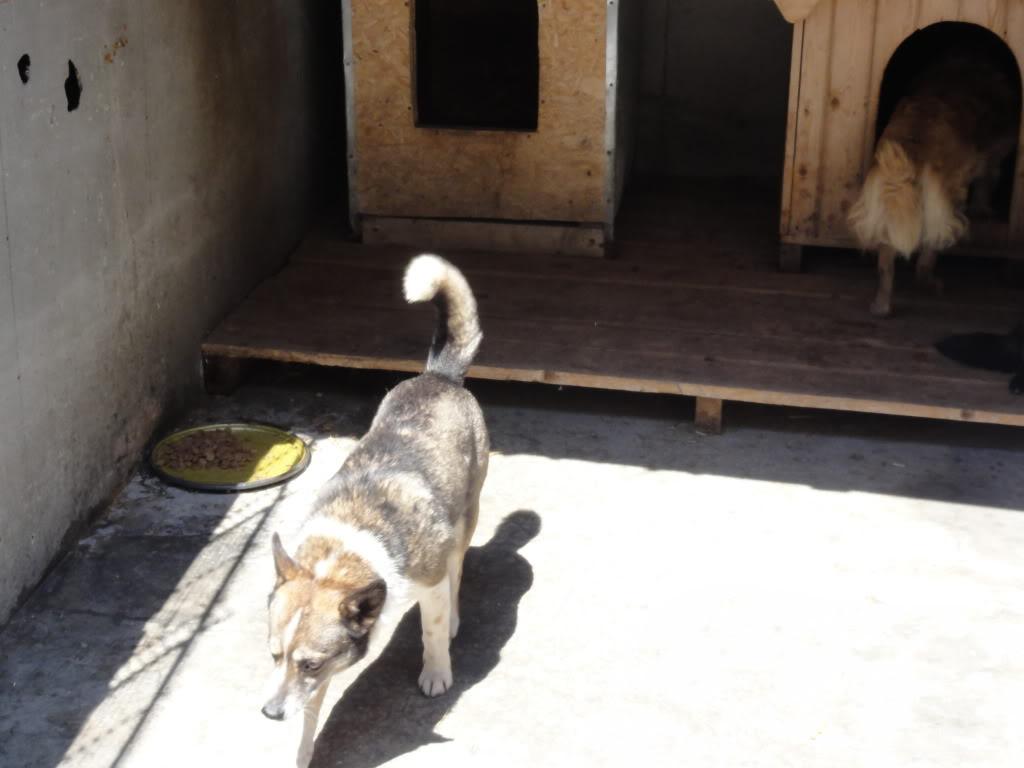 Les chiens d'Adina DSC08710
