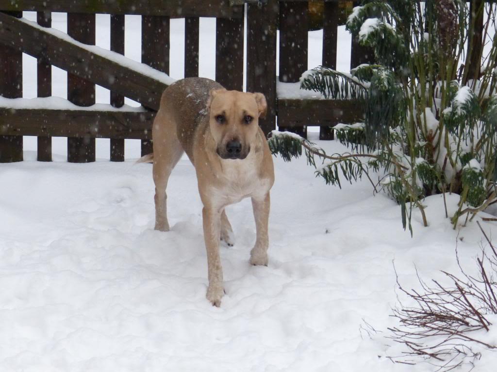 Lila, adorable chienne croisée, née en octobre 2011 P1020627_zps8e982557