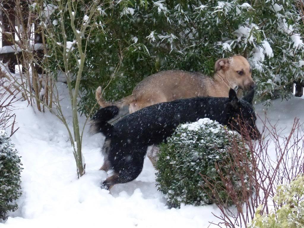 Lila, adorable chienne croisée, née en octobre 2011 P1020633_zps9286b522