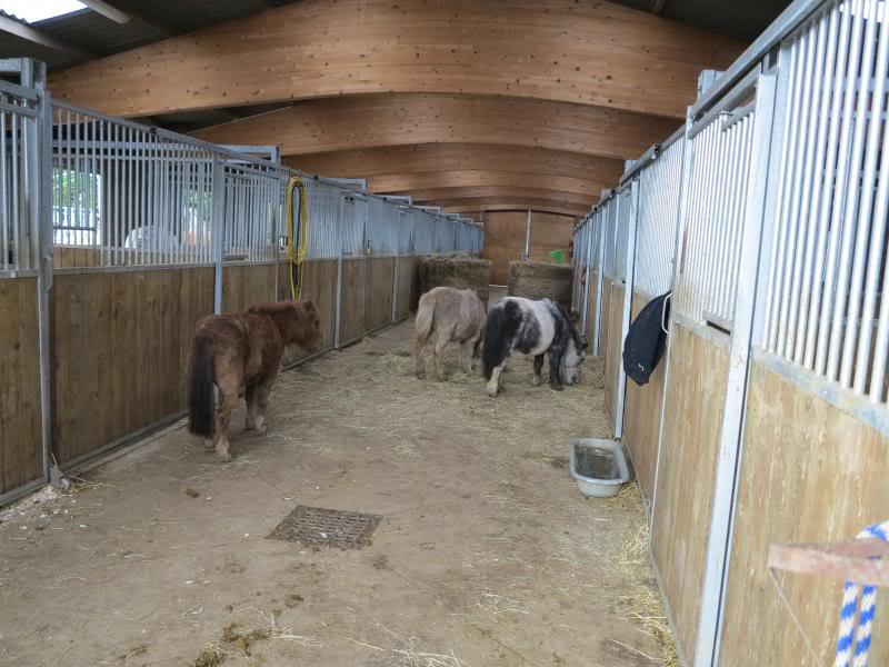 L'équipe Charly le Blanc en visite au refuge de la Mare Auzou IMG_0050