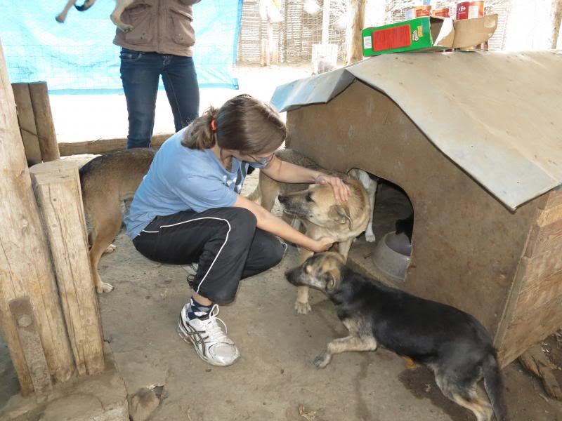 Nana, mère des chiots des ruines, 6 ans - Adoptée ! IMG_1071