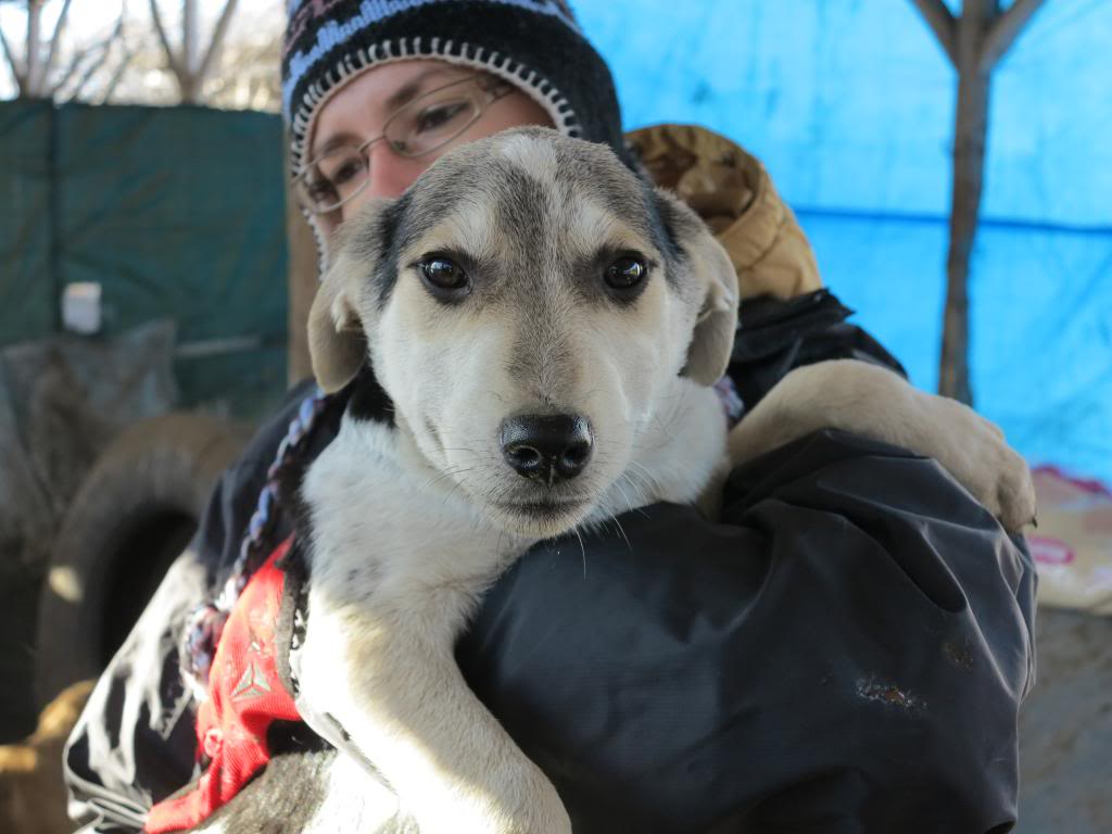 Ricky, petit mâle, né en septembre 2012, abandonné au bord de la route  IMG_3533_zpsdde9f962
