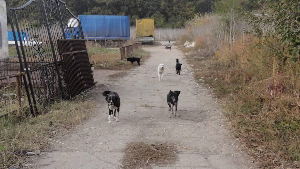 > Mika, un amour de petite chienne, née en mai 2011 - Adoptée DSC04290