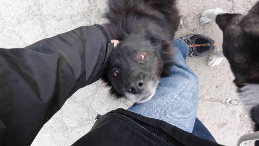 Spike, né en 2005, 7kg, très attaché à l'homme  DSC04295