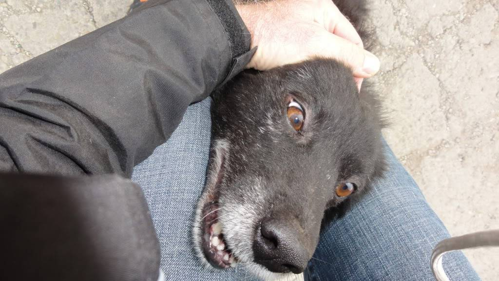 Spike, né en 2005, 7kg, très attaché à l'homme  DSC04296