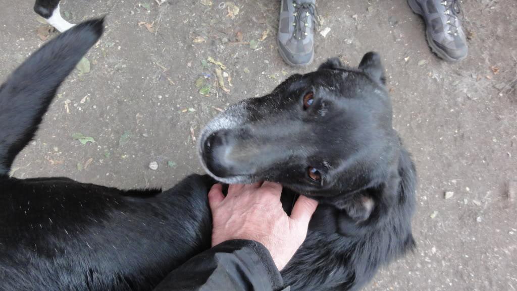 Baloo, mâle, né en 2008, type labrador  DSC04402