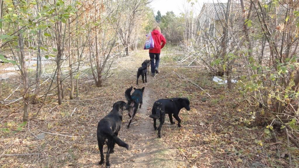 > Mika, un amour de petite chienne, née en mai 2011 - Adoptée DSC04422