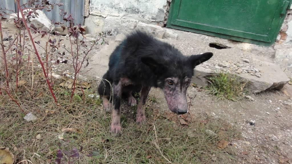 > Mika, un amour de petite chienne, née en mai 2011 - Adoptée DSC04445