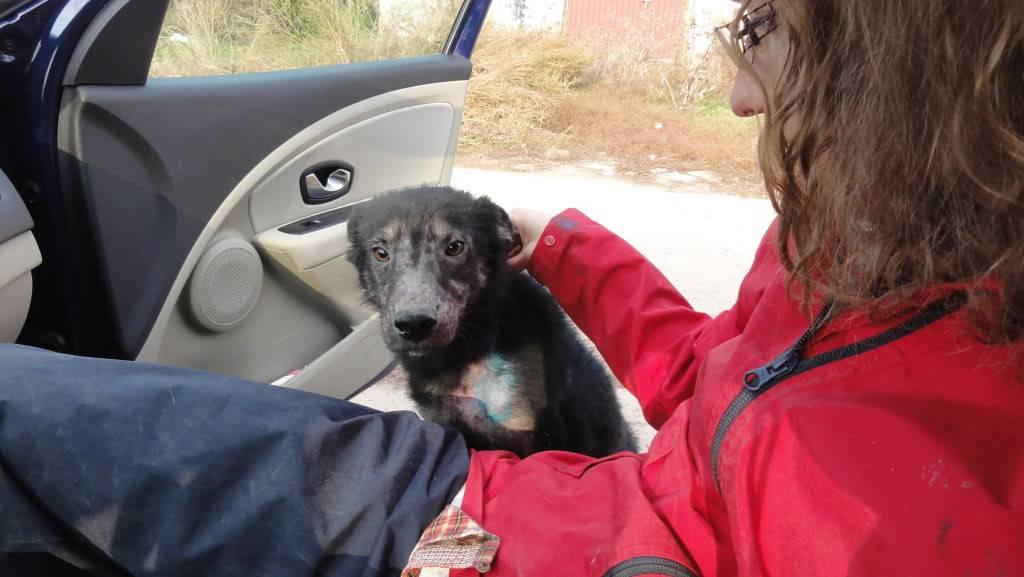 > Mika, un amour de petite chienne, née en mai 2011 - Adoptée DSC04455