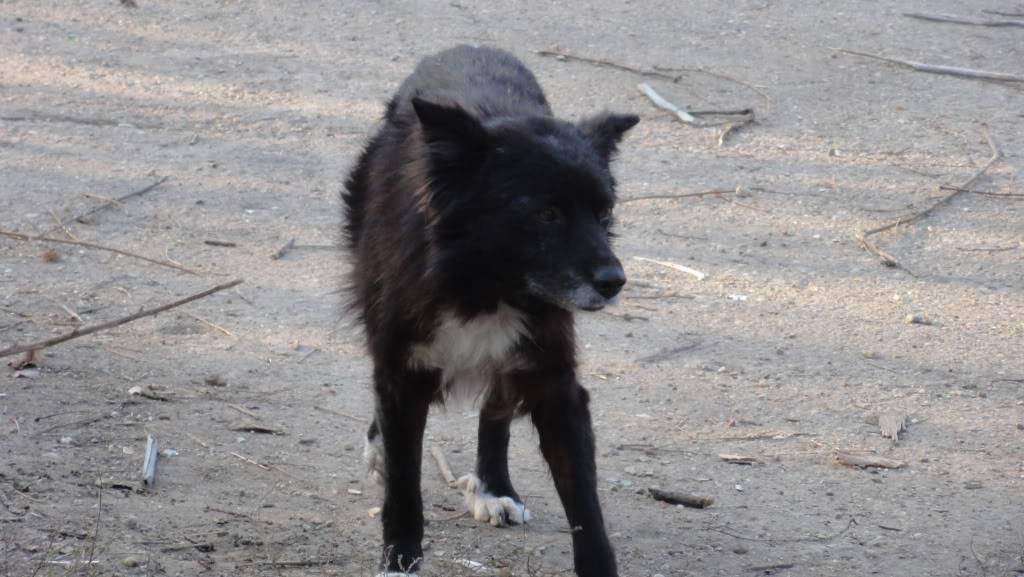 Spike, né en 2005, 7kg, très attaché à l'homme  DSC04473