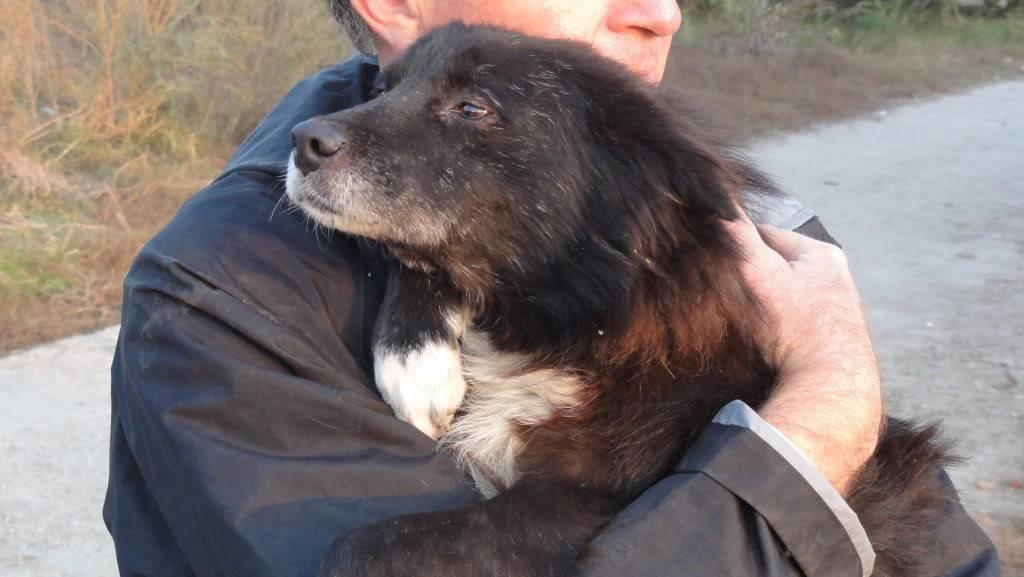 Spike, né en 2005, 7kg, très attaché à l'homme  DSC04493