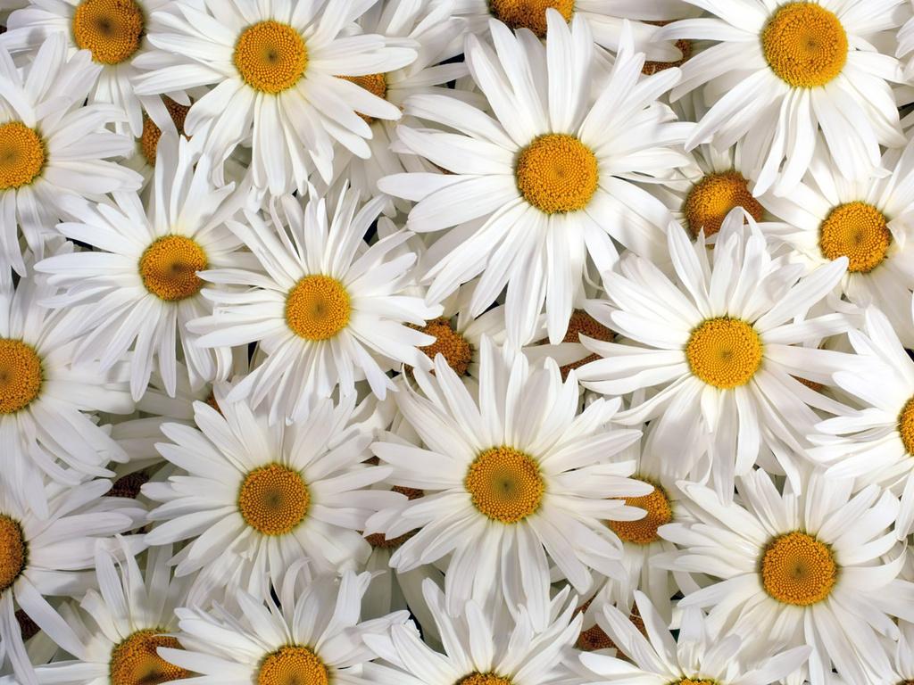 Мир цветов, растений, деревьев 1-14