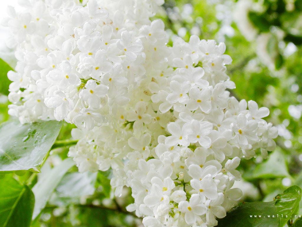 Мир цветов, растений, деревьев 4-7