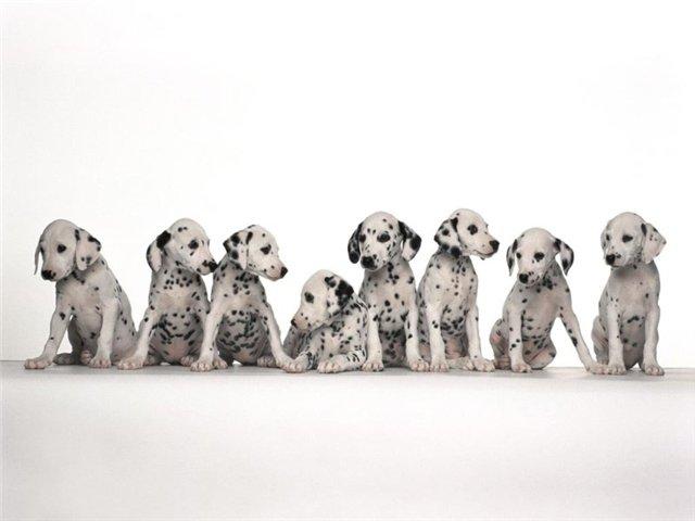 Красивые и добрые собаки 414043E043B043C043004420438043D043504460-1_zps65420b39