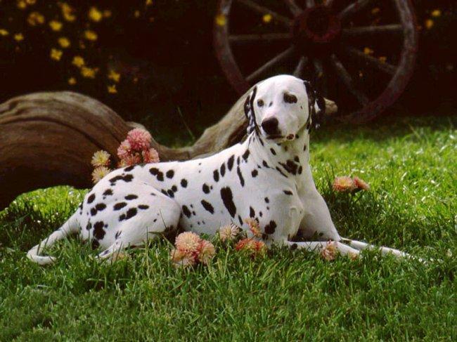 Красивые и добрые собаки 414043E043B043C043004420438043D043504460-2_zps16d249f3