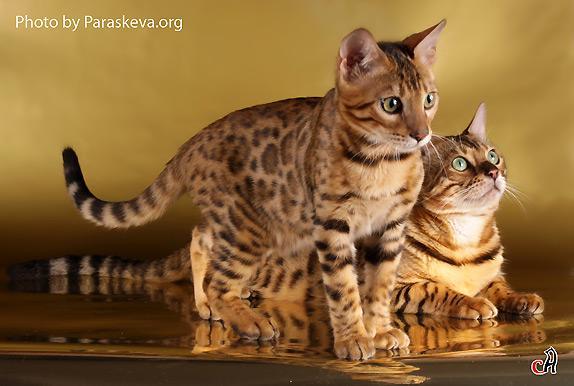 Кошки (Cats) 60284f7a