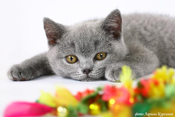 Кошки (Cats) Cat1