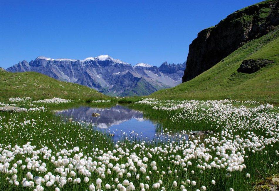 Альпийские Луга 1-6